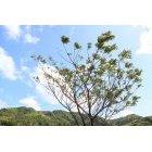 나무 631