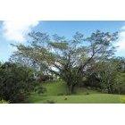 나무 643