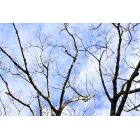 나무 651