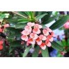 꽃 340