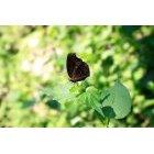 나비 10