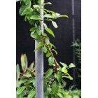 식물 73