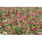 꽃 389
