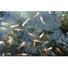 물고기 2