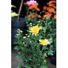 꽃 550