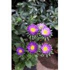 꽃 569