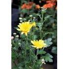 꽃 584