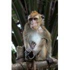 원숭이 11