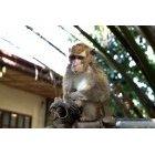원숭이 8
