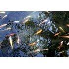 물고기 14