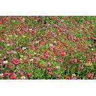 꽃 590