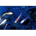 물고기 8