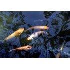 물고기 9