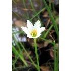 꽃 596