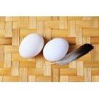 계란 43