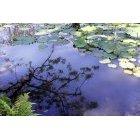 연못 14
