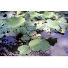 연못 15