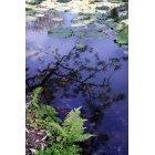 연못 16