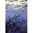 연못 17