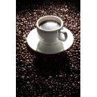 커피 302