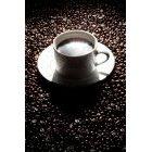 커피 301