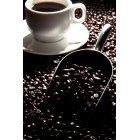 커피 304