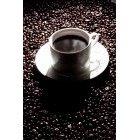 커피 307