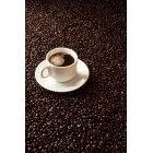 커피 423