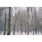 겨울풍경 6