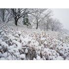 겨울풍경 5