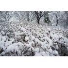 겨울풍경 4