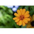 꽃 695
