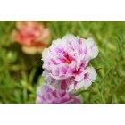 꽃 655