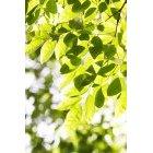 나뭇잎 344
