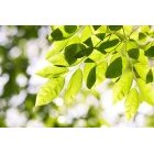 나뭇잎 343