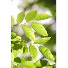 나뭇잎 340