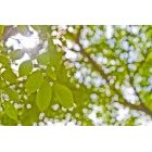 나뭇잎 326
