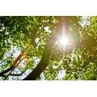 나뭇잎 321