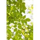 나뭇잎 318