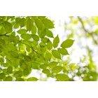 나뭇잎 317