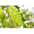 나뭇잎 315