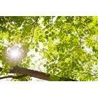 나뭇잎 314