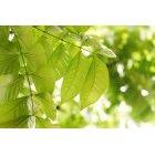 나뭇잎 310