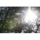 나뭇잎 347