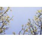 나뭇잎 351