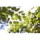 나뭇잎 366
