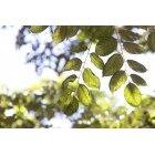 나뭇잎 364