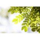 나뭇잎 362
