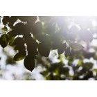 나뭇잎 352