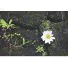 꽃 772